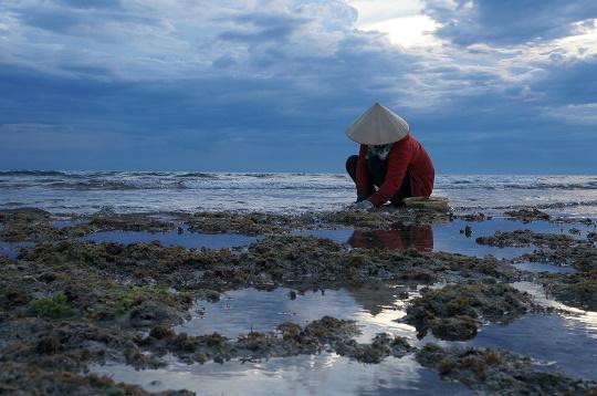 Collecting shellfish at sunset