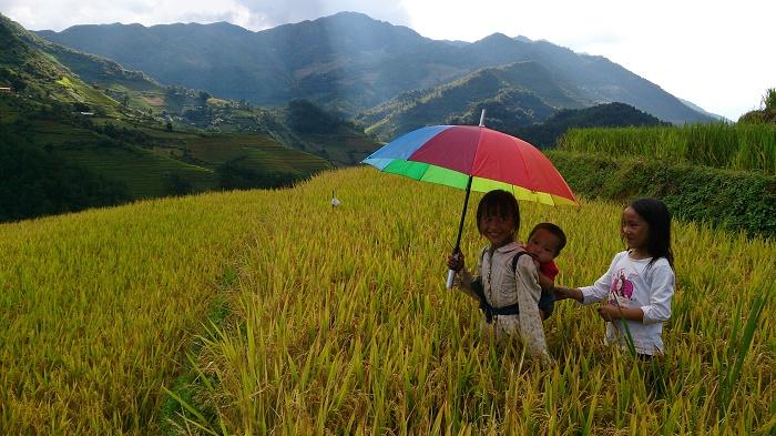 lan-hue-yen-bai-ruong-bac-thang-terraced-rice-field-1