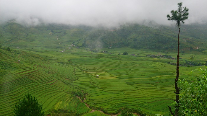lan-hue-yen-bai-ruong-bac-thang-terraced-rice-field-3