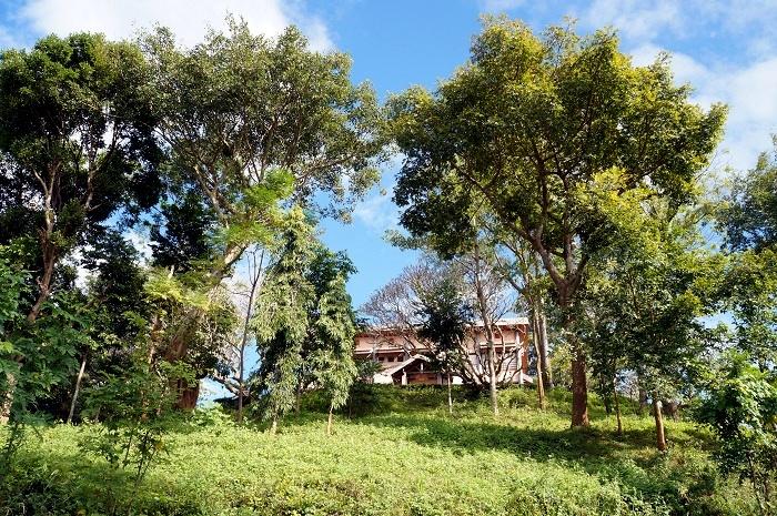 Biệt thự Bảo Đại nằm trên đỉnh đồi giữa những tán cây xanh um.