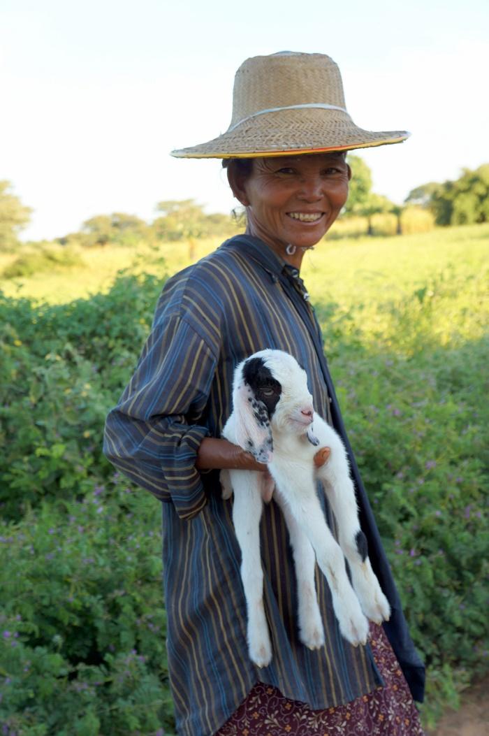 A goatherd woman (Bagan, 2013)